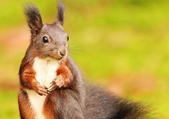 Eichhörnchenbuch Weißenhorn